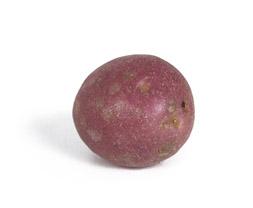 Potatis-Körsbärspotatis_Ensam_253x208